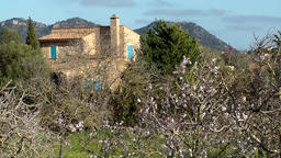 Spain Mallorca Island various 009 blossoming almond trees and country house Footage