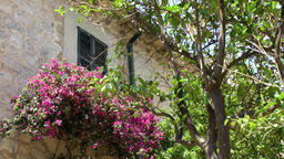 Spain Mallorca Island various 030 village Estellencs still life house and tree Footage