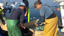 Sardine Fishermen stock footage