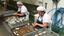 A Poveira fish canning factory Laundos Portugal Footage