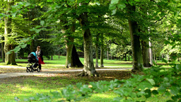 woman with a pram (baby) on a walk in the park - sunny - detail of branch Footage
