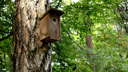 birdhouse in the forest - trees Footage