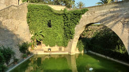 Spain Palma de Mallorca 100 pond with green water and swan in castle garden Footage