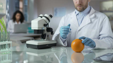 Scientist injecting orange with special substance to check amount of chemicals Footage