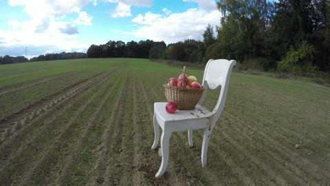 White antique chair on field in autumn and full apple fruits wicker basket. Time Footage