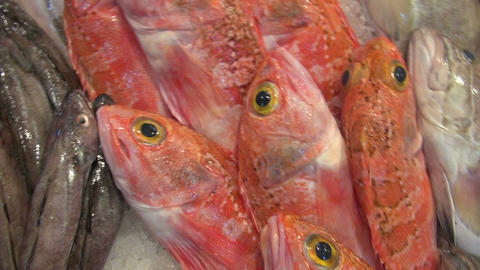 Camera moving over freshly caught fish on market stall Footage