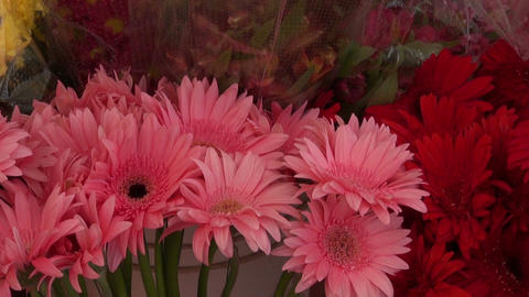 Gerberas and other flowers in market stall Footage