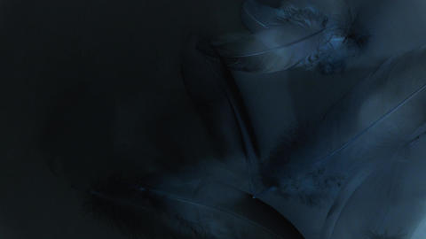 Dark animation with feathers - black, gray and blue... Stock Video Footage