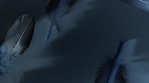 Dark animation with feathers - black, gray and blue strange atmosphere - elegant Animation