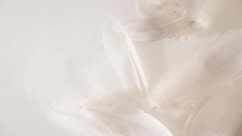 White feathers and down flowing away in a gentle breeze in a soft light Animation