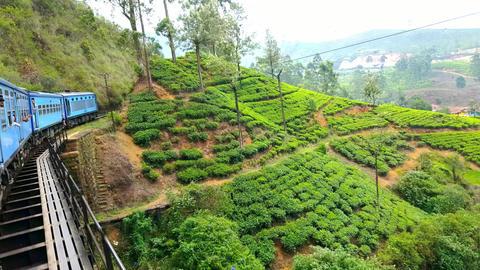 Train crossing bridge through tea plantation landscape in highland Sri Lanka Footage