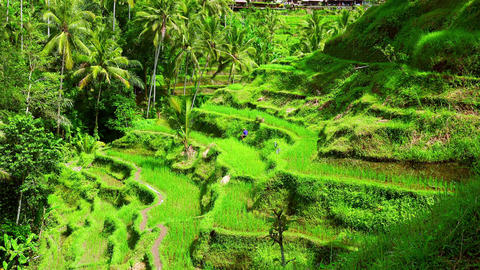 Magnificent landscape of rice terraces and lone worker cultivating field Footage