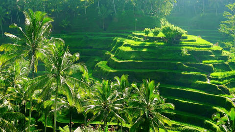 Beautiful scenery with paddy field surrounded by stepped… Stock Video Footage