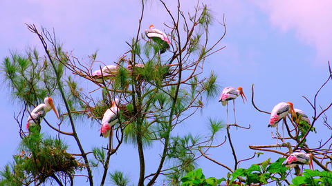 Painted storks resting in shadow of palm leaves on clear summer day Footage