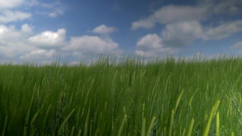 Left To Right Pan Along High Gras - Closeup Image