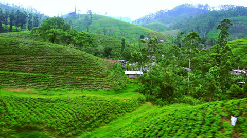 Tracking video of small farmers village houses at tea plantations. Sri Lanka Footage