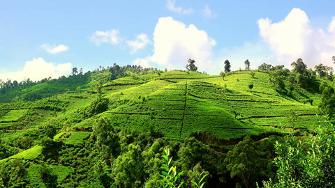 Sunny day at tea plantations in highlands Sri Lanka Footage