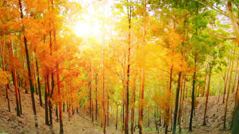 Tracking video of sun rays shining through dense tropical forest Footage