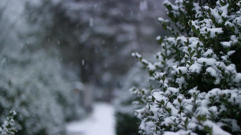 snow falling near green bushes Out Of Focus - 60 fps slow motion Footage