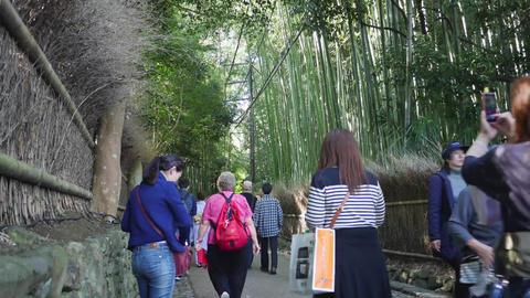 bamboo forest timelapse ライブ動画