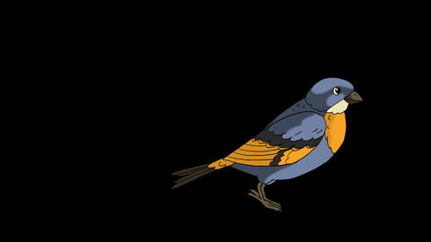 Little bird (bluebird) jumping. Animated footage with alpha channel Live Action