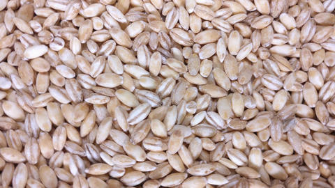 Pearl barley as background Live Action