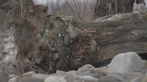 Japan Riverbed Driftwood in winter Footage