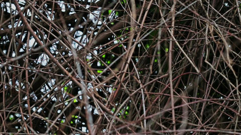 Wall Branches Image