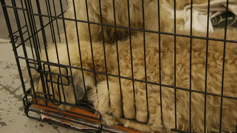 Mistreated sad dogs snuggling in cage, waiting for performance at canine show Footage