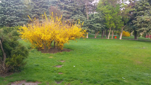 Spring in Park (8) Image