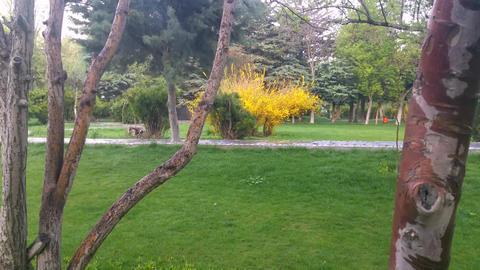 Spring in Park (9) Footage