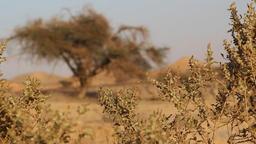 Change focus desert Footage