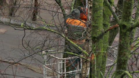 4K Middle-Aged City Service Worker Cuts Down Branches of Trees With A Footage