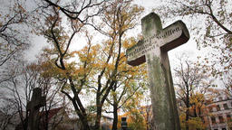 Grave in graveyard Footage