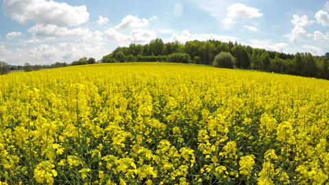 Moving over the rapeseed field Footage