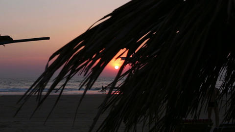 Sunset Through Waving Palm Leaves at Beach Footage