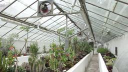 Modern greenhouse Footage
