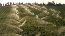 sprinklers watering fields Footage