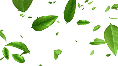 Green Leaves Flying on White Background. HD 1080. Looped. Alpha Mask Animation