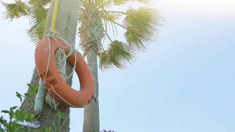 Video of orange lifebuoy on the palm tree in 4K ビデオ