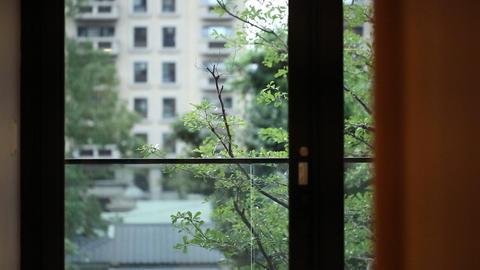 trees at balcony Filmmaterial