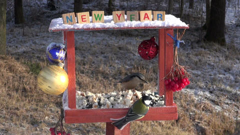 New Year decorated bird feeder and hungry wild birds Live Action