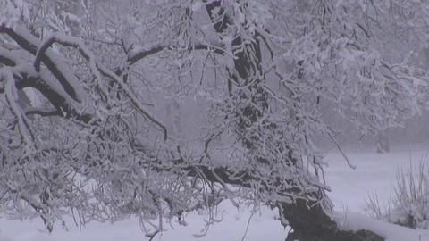 Snowy winter landscape Footage