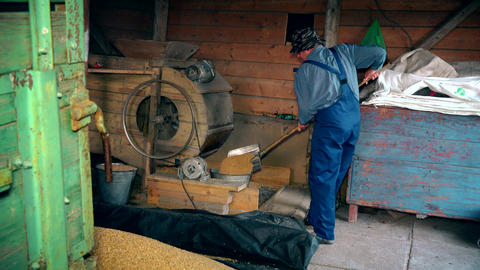 Farm worker sifting grain in farm building. Zoom in Footage