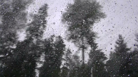 Trees through car bus window on rainy day Footage