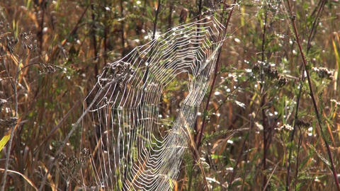 Spider web in the autumn Footage