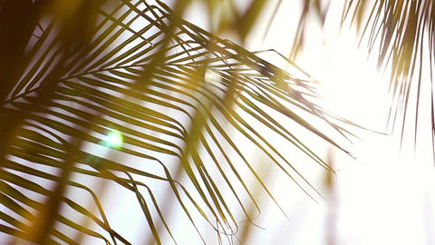 Sunlight shines down on exotic leaves of palm trees along... Stock Video Footage