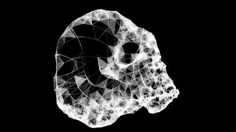 Plexus Skull Scanboard Loop