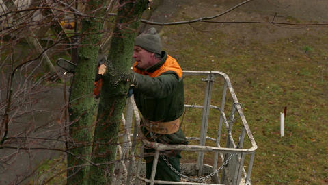 1080p Middle-Aged City Service Worker Cuts Down Branches of Trees With A Footage