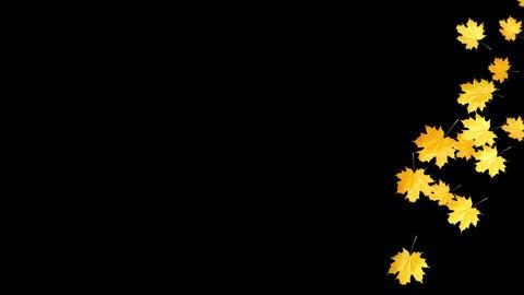 Autumn Leaves Falling 02 Animation